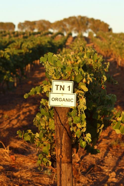 Joostenberg organic wine