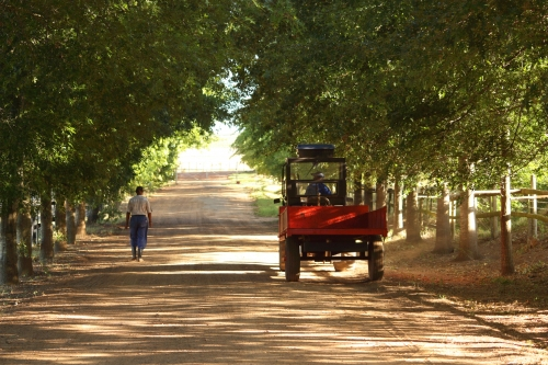 Organic wine farm
